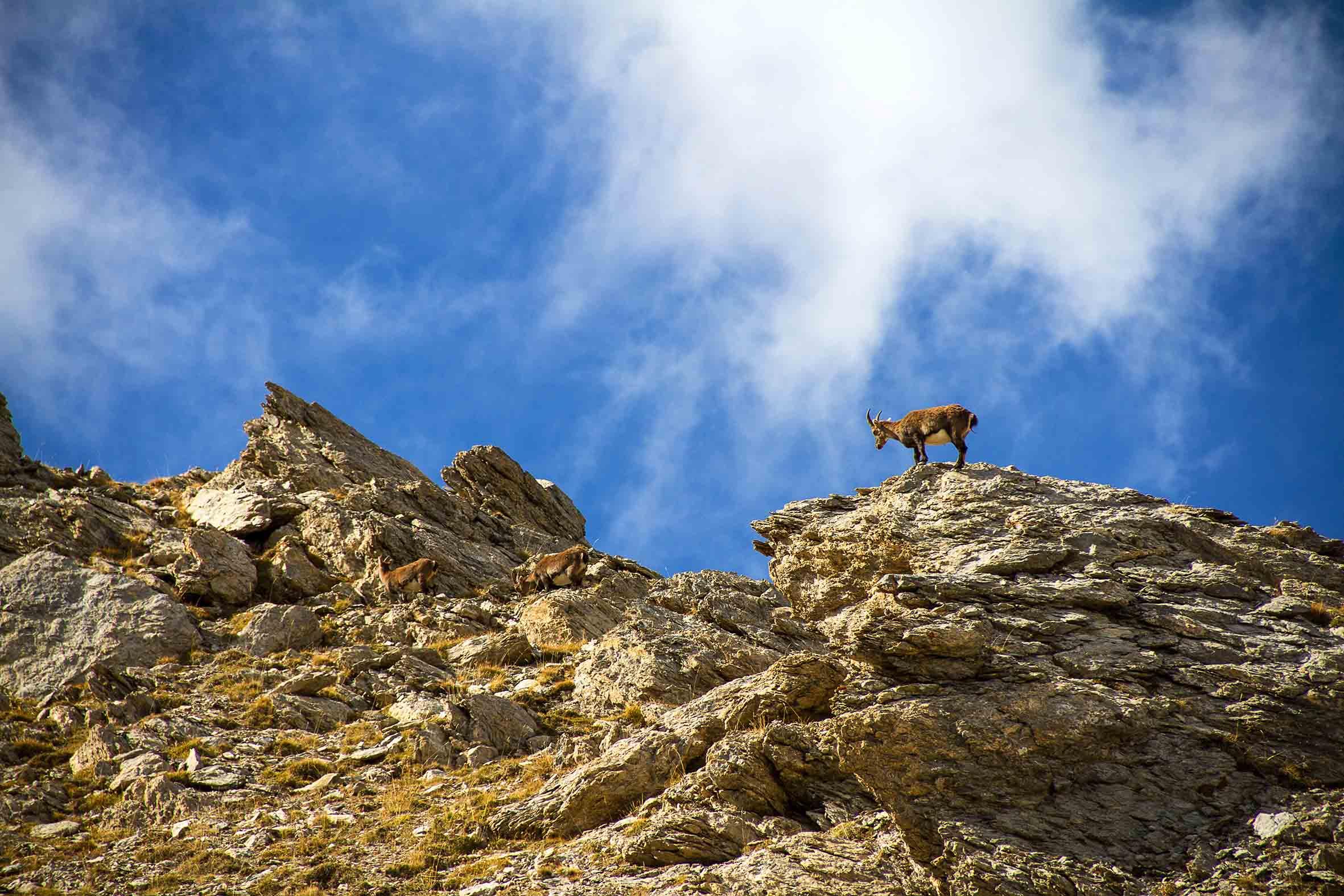 Bouquetin-camping-tignes-(73320)-tente-montagne-vacances